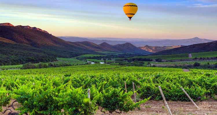 Hot-air balloon over the Cape Winelands