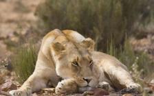 Aquila Wildlife Safari Tour (SC9 )