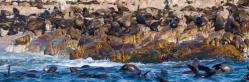 Full Day Marine Big 5 Safari Experience (SE7)