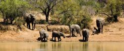 Full Day Sun City & Pilanesberg Tour (SJ7)
