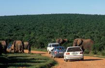 Full Day Addo Elephant National Park Tour (SP2)
