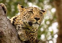 Full Day Kruger Park Open Vehicle Safaris - Hazyview (SM9)