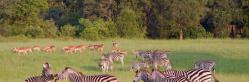 Afternoon Kruger Park Open Vehicle Safari Safari (SM9)