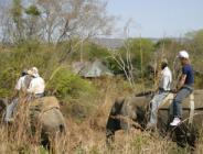 Elephant Experience and Lunch at Hippo Hollow -  Elephant Whispers