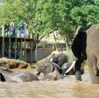 Ultimate Elephant Experience- Elephant Whispers